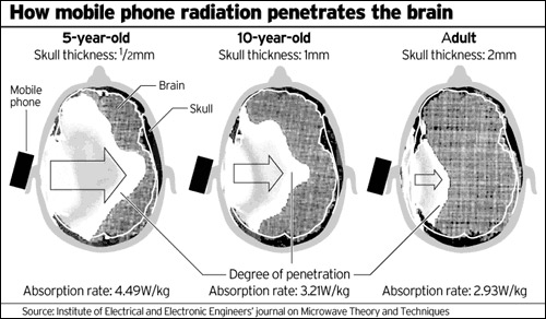 Cell Phone Brain Penetration