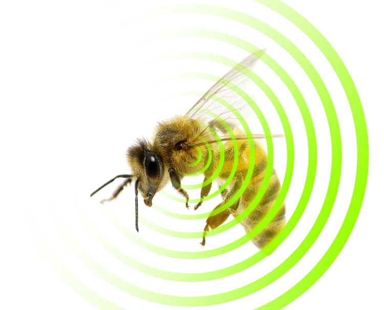 Disappearing Bees Due to EMF Radiation Saturation