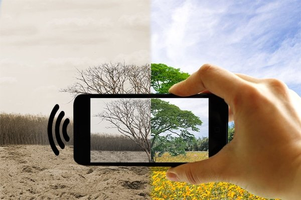 Effects of EMF radiation on the environment